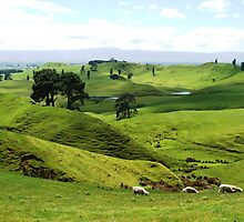 New Zealand's Green and Pleasant Land by Nigel Byrne