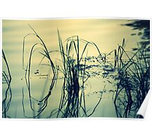 Reeds and Reflections in the Rainbow River Poster