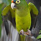 I'm An Ecologist - I'm Totally Green... - Soy Ecólogo - Soy Totalmente Verde by Bernhard Matejka