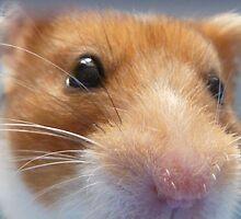 I Smell... A Camera? by Vicki Spindler (VHS Photography)