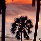 Swaying palms by Dan MacKenzie
