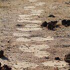 In giants footsteps by Explorations Africa Dan MacKenzie