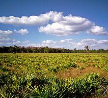 Palmetto & Sky. Three Lakes W.M.A. by chris kusik