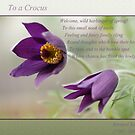 Ode to Spring ~ Crocus by JETAdamson