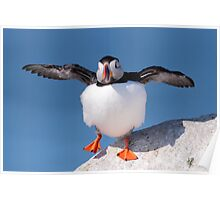 Puffin Dance Poster