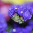 blue flower by Rachael Donegan