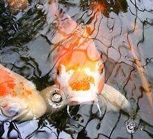 Grumpy Fish  by HolyCrap