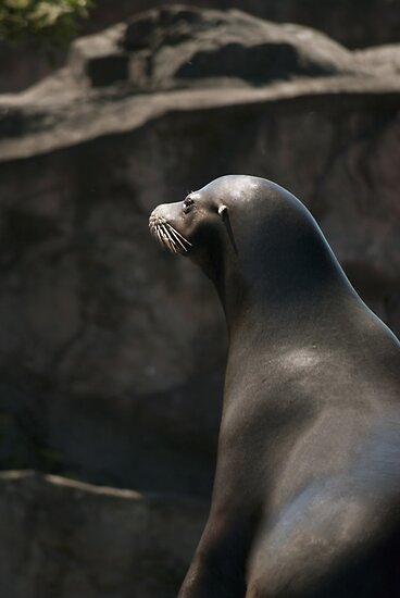 Sea Lion by Vac1