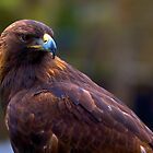 Golden Eagle by thvisions