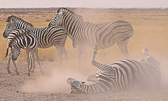 Dust Bath by globeboater