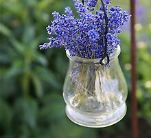 lovely lavender by janetlee