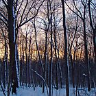 Sunset in the Woods - Green Lane Pennsylvania by MotherNature