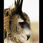 Eagle Owl In Profile by Roger Hall
