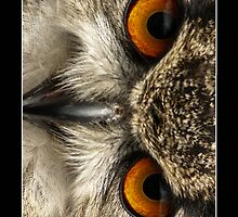 Eagle Owl Eyes iPhone case by Roger Hall