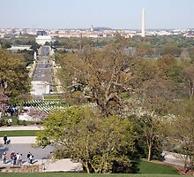 A View From Arlington by Cora Wandel
