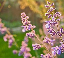 Purple Glow by Deb Maidment