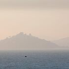 The San Francisco Bay by KelseyClaire11