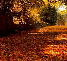 Autumns Carpet by Chris Clark