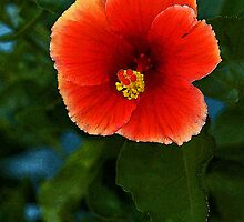 Vermillion Hibiscus by Maria A. Barnowl