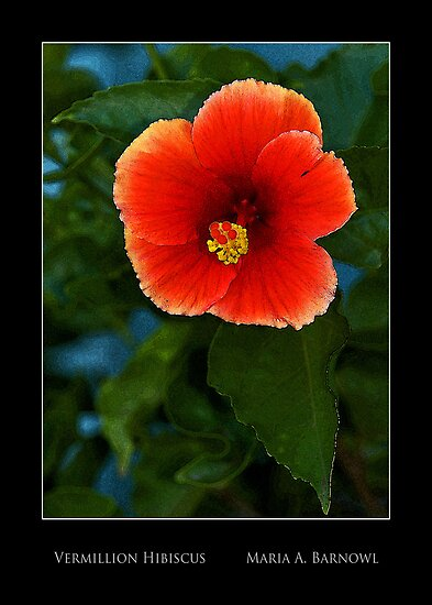 Vermillion Hibiscus - - Posters & More by Maria A. Barnowl