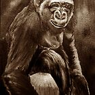 The Chimpanzee *Traditional Art in Sepia Watercolor* by deborah zaragoza