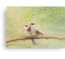 Juvenile variegated fairy-wrens Canvas Print