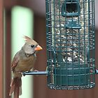 Cardinal at the Birdfeeder by Terry  Berman