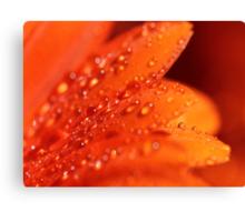 Orange Jewels Canvas Print