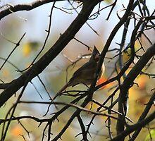 Cardinal in a Tree by Terry  Berman