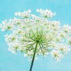 Queen Anne's Lace by debschmill