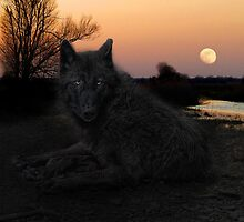 the black wolf by Jo-PinX