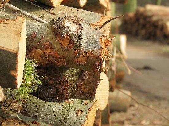 Just wood by Peter Wiggerman
