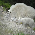 Mother and Baby Mountain Goat by Dyle Warren