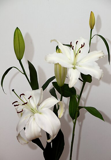 White Lilies by Carole-Anne