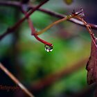 Autumn Teardrop by Zoe Harris