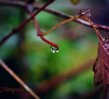 Autumn Teardrop by Zoe Harris