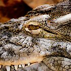 Crocodile in Relaxing mode by Megas