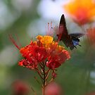 Flower @ Butterfly by Tom Broderick IPA