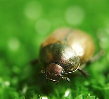 Beetle juice by jussta