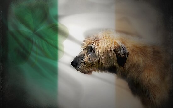 Irish by Carol Bleasdale