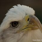 Bald Eagle by LaurieSalzler