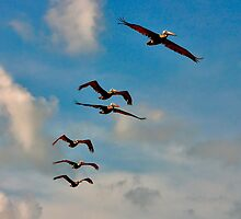 Pelicans in Flight. Melbourne Shores Florida. by chris kusik