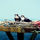 Osprey Nest Decor by Sharon Woerner