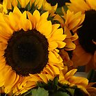 Sunflowers by Tina Hailey
