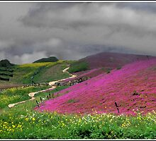 Clouds Over a Purple Field of Flowers by Wayne King