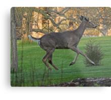 Running White-Tailed Buck Metal Print