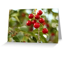 Cherries on the Cherry Tree Greeting Card