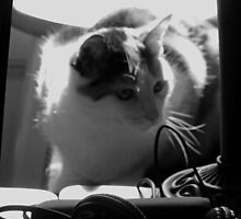 Kitten Investigator (Black and White) by Nevermind the Camera Photography