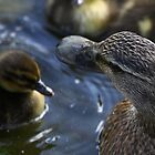 ducks by mark tabrett