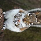 squirrel by mark tabrett